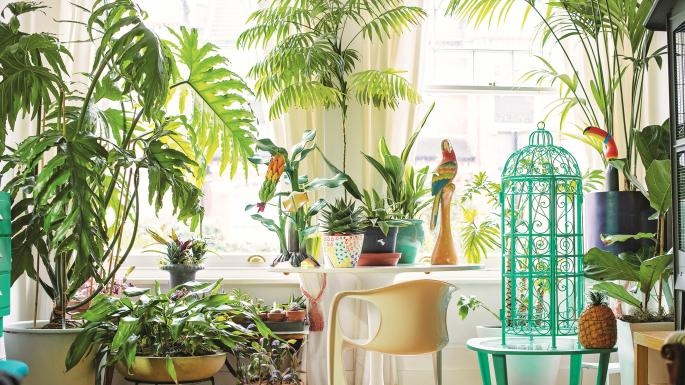 Know How Keeping Plants In Your House Can Benefit Your Health