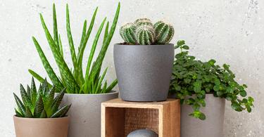 Indoor Plant Myth