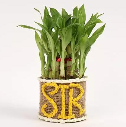plant dubai