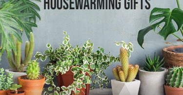 Housewarming Plant