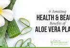 Aloe Vera Benifits
