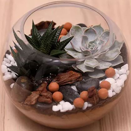 Succulents in Fish Bowl
