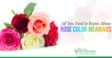 All You Need to Know About Rose Color Meanings