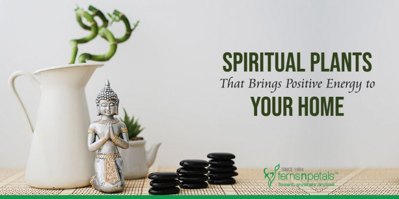 9 Best Spiritual Plants That Will Bring Positive Energy to Your Home