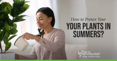 How to Protect Your Plants in Summers?