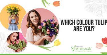 Which Color Tulip Are You?