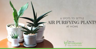 6 Spots to Settle Air-Purifying Plants at Home