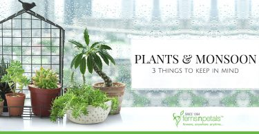 Plants & monsoon: 3 Things to keep in mind
