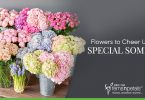 Flowers to Cheer Up your Special Someone