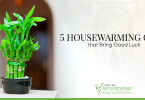 5 Housewarming Gifts that Bring Good Luck